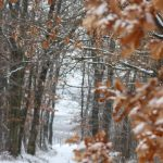šuma Kutjevo