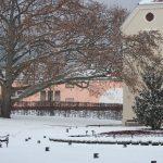 park kod kutjevačkog dvorca