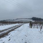 vinogorje Kutjevo