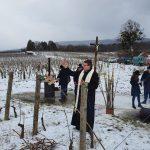 blagoslov vinograda Vincelovo kutjevo