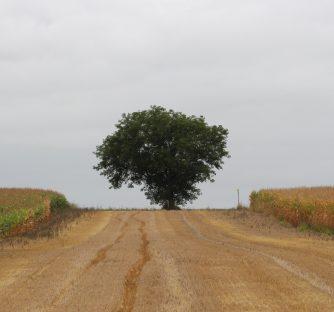 Javni poziv za ublažavanje šteta poljoprivrednicima