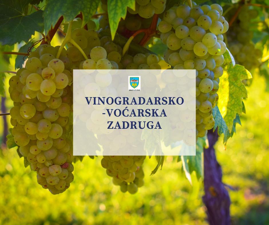 Vinogradarsko-voćarska zadruga djelovala je u Kutjevu od 1926. – 1955.